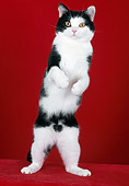 CAT 02 CH0011 01