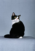 CAT 02 CH0012 01