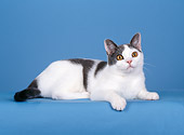 CAT 02 CH0014 01