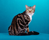 CAT 02 CH0016 01