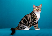 CAT 02 CH0017 01