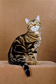 CAT 02 CH0019 01