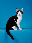 CAT 02 CH0022 01