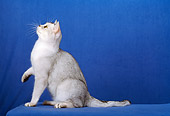 CAT 02 CH0024 01