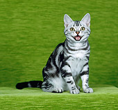 CAT 02 CH0026 01