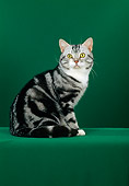 CAT 02 CH0028 01