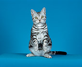 CAT 02 CH0029 01