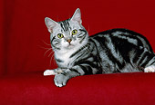 CAT 02 CH0030 01