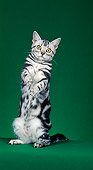 CAT 02 CH0032 01