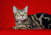 CAT 02 CH0035 01