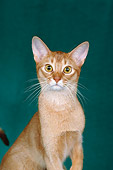 CAT 02 CH0041 01