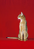 CAT 02 CH0048 01