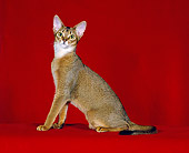 CAT 02 CH0050 01