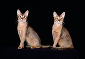 CAT 02 CH0051 01