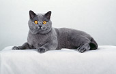 CAT 02 CH0054 01