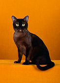 CAT 02 CH0067 01