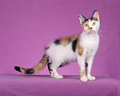 CAT 02 CH0070 01
