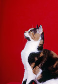 CAT 02 CH0072 01