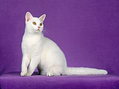 CAT 02 CH0075 01
