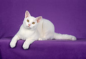CAT 02 CH0076 01