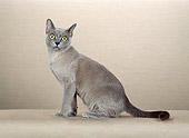 CAT 02 CH0080 01