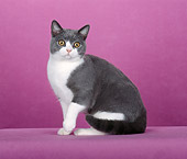 CAT 02 CH0087 01
