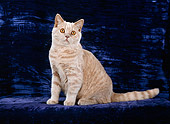 CAT 02 CH0090 01