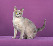 CAT 02 CH0093 01