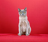 CAT 02 CH0097 01