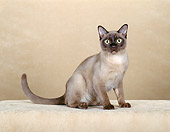 CAT 02 CH0098 01