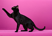 CAT 02 CH0100 01