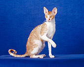CAT 02 CH0101 01