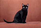 CAT 02 CH0102 01