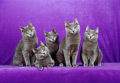 CAT 02 CH0110 01
