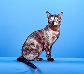 CAT 02 CH0111 01