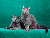 CAT 02 CH0112 01