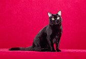 CAT 02 CH0113 01