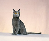 CAT 02 CH0117 01