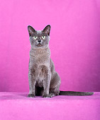 CAT 02 CH0120 01