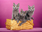 CAT 02 CH0123 01
