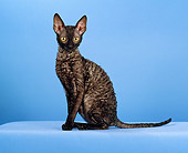 CAT 02 CH0126 01