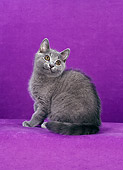 CAT 02 CH0127 01