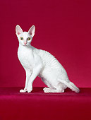 CAT 02 CH0130 01