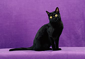 CAT 02 CH0132 01
