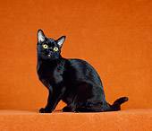 CAT 02 CH0133 01