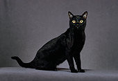 CAT 02 CH0134 01