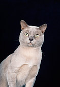 CAT 02 CH0135 01