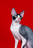 CAT 02 CH0137 01