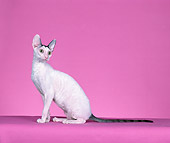 CAT 02 CH0138 01