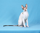 CAT 02 CH0139 01